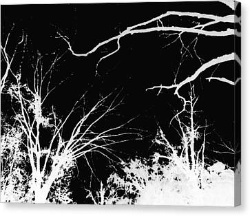 Canvas Print featuring the photograph Tree Tops by Max Mullins
