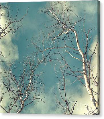 Bough Canvas Print - Tree Tops 4 by Priska Wettstein