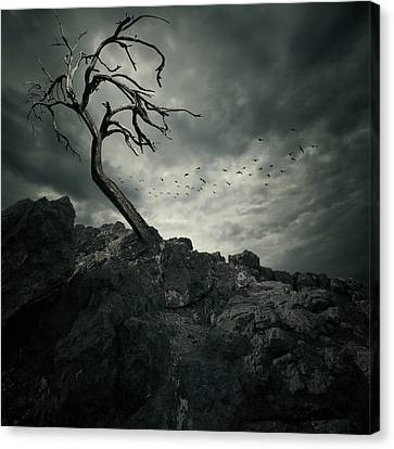 Storm Canvas Print - Tree by Zoltan Toth