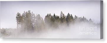 Trees In Mist Canvas Print by Rod McLean