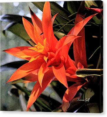 Tropical Orange IIi Canvas Print by Suzanne Gaff