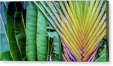 Tropical Palms Canvas Print