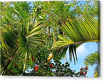 Tropical Plants Canvas Print by Zalman Latzkovich