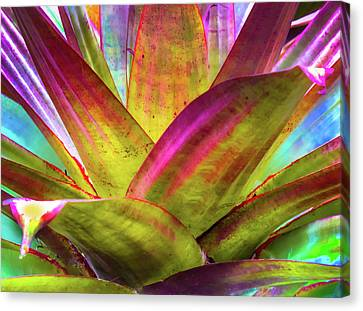 Tropicana Canvas Print by Karen Wiles