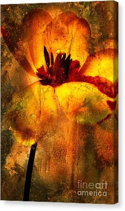Tulip Canvas Print by Bernard Jaubert