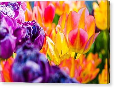 Canvas Print featuring the photograph Tulips Enchanting 39 by Alexander Senin