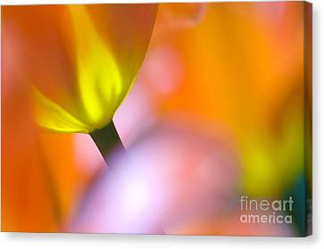 Tulips Canvas Print by Silke Magino