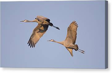 Canvas Print featuring the photograph Two Together by Wanda Krack