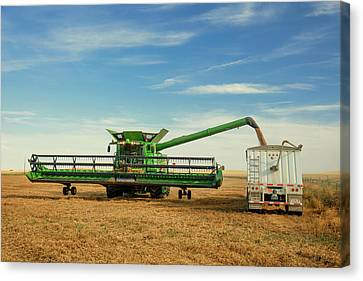Unloading Chickpeas Canvas Print by Todd Klassy