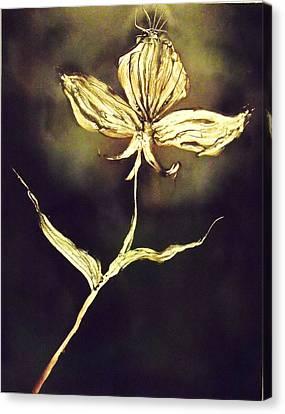 Untitled Canvas Print by Anna Villarreal Garbis