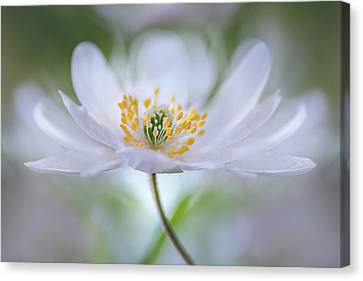 Untitled Canvas Print by Mandy Disher
