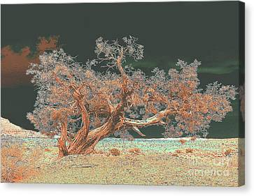 Canvas Print featuring the photograph Unusual Tree - Digital Painting by Merton Allen