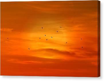 Upon A Sunset Flight Canvas Print by Angie Tirado