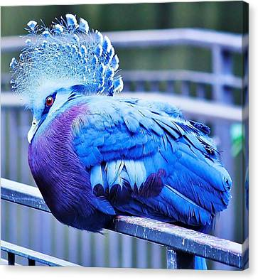 Canvas Print featuring the photograph Victoria Crowned Pigeon by Al Fritz