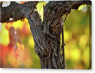 Grapes Canvas Print - Vine by Brandon Bourdages