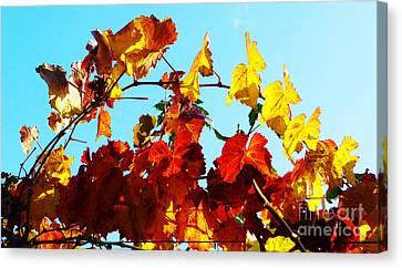 Vineyard 12 Canvas Print by Xueling Zou