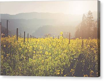 Vineyard In Spring With Vintage Instagram Film Style Filter Canvas Print