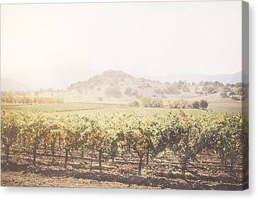 Vineyard In The Fall With Vintage Instagram Style Filter Canvas Print