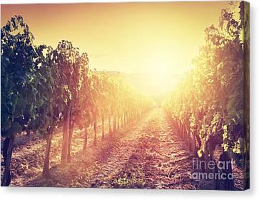 Brunello Canvas Print - Vineyard Landscape In Tuscany by Michal Bednarek