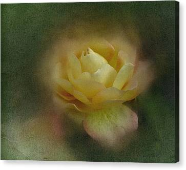 Canvas Print featuring the photograph Vintage October Rose  by Richard Cummings