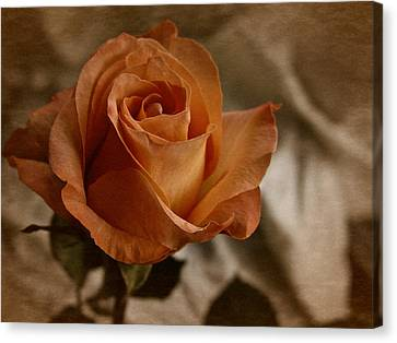 Canvas Print featuring the photograph Vintage Orange Rose by Richard Cummings