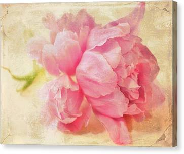 Vintage Pink Canvas Print by Cathie Tyler