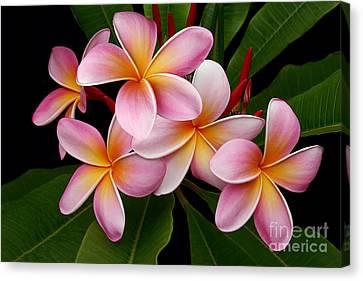Canvas Print featuring the photograph Wailua Sweet Love by Sharon Mau