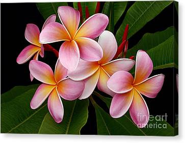 Canvas Print featuring the photograph Wailua Sweet Love by Sharon Mau