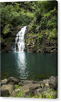 Waimea Falls Canvas Print by Charmian Vistaunet