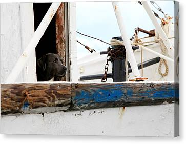 Waiting On His Best Friend Canvas Print by Toni Hopper