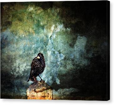Watcher Canvas Print by Moon Stumpp