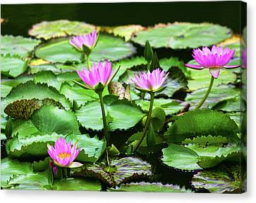 Canvas Print featuring the photograph Water Lilies by Anthony Jones