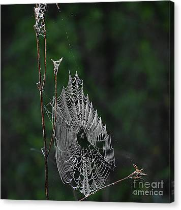Canvas Print featuring the photograph Webs We Weave by Skip Willits