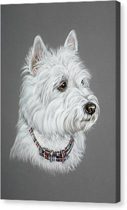 West Highland White Terrier  Canvas Print by Patricia Ivy