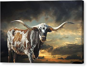 Rodeo Canvas Print - West Of El Segundo by Robert Anschutz