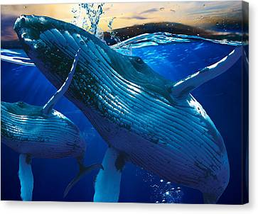 Whales Canvas Print - Whale Watching Art by Marvin Blaine