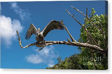 Canvas Print - What Are You Looking At by Mariola Bitner
