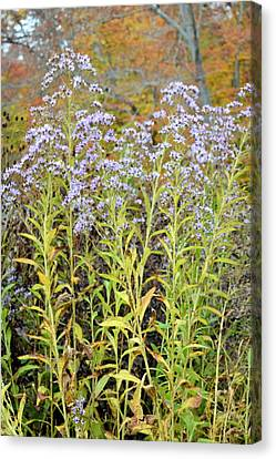Canvas Print featuring the photograph Whimsy by Deborah  Crew-Johnson