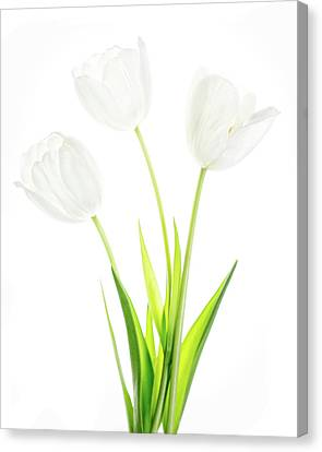 Canvas Print featuring the photograph White On White by Rebecca Cozart