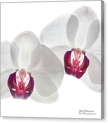 White Phalaenopsis Orchids #3059 Canvas Print