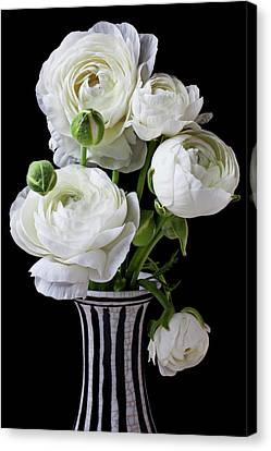 White Flower Canvas Print - White Ranunculus In Black And White Vase by Garry Gay