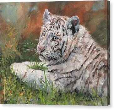 White Tiger Cub Canvas Print by David Stribbling