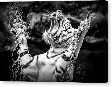 White Tiger Canvas Print by Jijo George