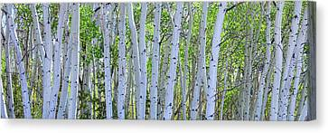 White Wilderness Panorama Canvas Print by James BO Insogna