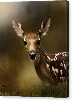 Whitetail Fawn Canvas Print by TnBackroadsPhotos