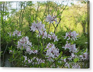 Canvas Print featuring the photograph Wild Azaleas 2 by Chris Scroggins