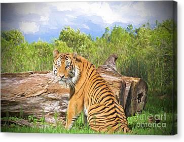Wild Kingdom Canvas Print by Judy Kay