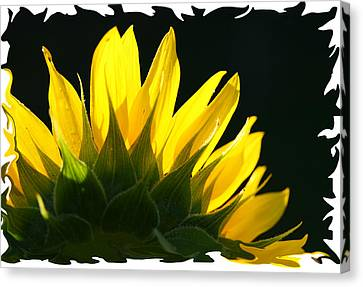 Canvas Print featuring the photograph Wild Sunflower by Shari Jardina