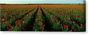 Wildflower Farm, Fredericksburg, Texas Canvas Print by Panoramic Images