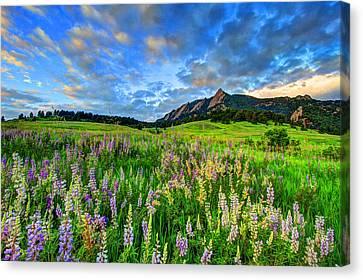 Fort Collins Canvas Print - Wildflower Wonder by Scott Mahon